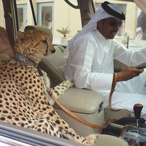 Такое возможно только в Дубае (Фото)