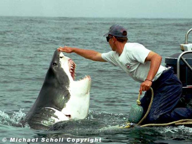 рыбак спас акулу