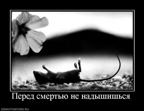 245755_pered-smertyu-ne-nadyishishsya