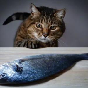 Почему кошки привередливы в еде