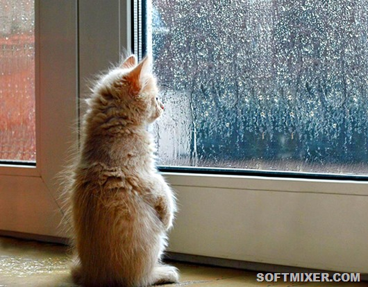 cat-waiting-window-69_thumb[13]