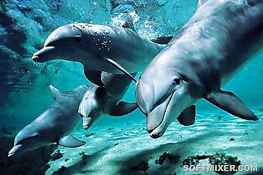 delfiny-chernogo-morya_thumb[9]